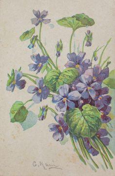 Cartolina Violetta C. Klein