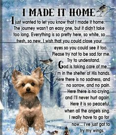 Dog Loss Quotes, Dog Quotes Love, Pet Loss Grief, Loss Of Dog, Dog Heaven Quotes, Pet Poems, Look T Shirt, Pet Remembrance, Grieving Quotes
