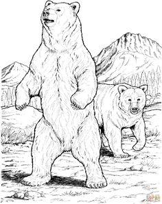 Black Bears as Coloring Book Image - Cub /& Adult Bear Modern Animal Postcard
