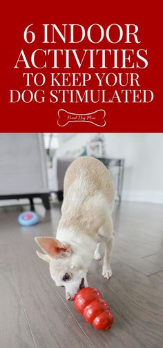 6 Indoor Dog Activities To Keep Your Pooch Stimulated | Mental Stimulation for Dogs | Dog Exercise Tips | Dog Care Tips |