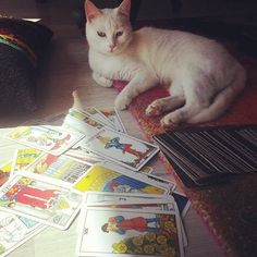 Good morning  Merlin #cat looking #tarotcards Kedimiz merlin tarot kartlarina bakarken pek bir düşünceli #katze #kedi #kediler #cats #tarots #catstagram #catsofinstagram #tarotfalı #onlinefal  #Astroloji #burclar #tarotname #Doğumharitası #katina #askfali #cute  #кот #kedi #katze #catstagram  #catstagram #kediler #cats #kitty # #instacat  #猫 #happy #cutecat #tarotoftheday #tarotonline by tarotname_com