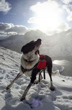 Beautiful Border Collie in a snowy mountain! This is Brody who was rehomed from the Border Collie Trust GB which is a fabulous rescue with amazing staff that we support here at Arden Grange. Brody's owners continued to feed him Arden Grange naturally hypoallergenic dog food which suits him wonderfully and means he's picture perfect as you can see here!