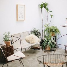 living room, bench, Sofa, chairs and plants, Wire furniture, woven, basket