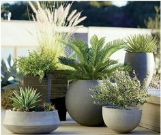 Container Gardening Ideas Container gardening pots - Create a gorgeous outdoor area with our container garden ideas. See the three essential elements for container gardening. Outdoor Planters, Garden Planters, Outdoor Gardens, Planter Pots, Modern Gardens, Patio Plants, Potted Garden, Planter Ideas, Concrete Planters