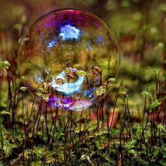 Soap Bubble and Lichen Blowing Bubbles, Bizarre, Soap Bubbles, Jolie Photo, Macro Photography, Faeries, Bunt, Cool Photos, Amazing Photos