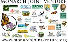 The Monarch Joint Venture Monarch Butterfly Migration, Joint Venture, Bugs And Insects, Native Plants, Hummingbirds, Ecology, Bees, Butterflies, Wildlife