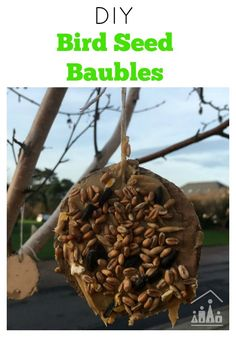 Our DIY Bird Seed Baubles are the perfect Christmas treat for your garden birds. Made from peanut butter and bird seed, our bird feeders are the perfect winter activity to do with kids of all ages. Christmas Arts And Crafts, Christmas Activities, Winter Activities, Paper Bag Crafts, Tissue Paper Crafts, Seed Craft, Coffee Filter Crafts, Garden Birds, Diy Bird Feeder