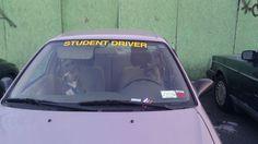 Hilarious! 'Drive! Dog! Drive!' #meme