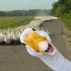 There's always one in the crowd...
