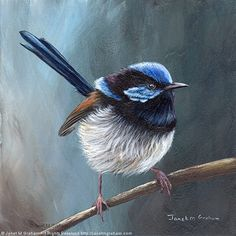 Superb Fairy Wren No 9 by Janet Graham Acrylic ~ 6 inches x 6 inches Bird Drawings, Animal Drawings, Drawing Animals, Bird Pictures, Pictures To Draw, Bird Artists, Feather Art, Australian Animals, Fashion Painting