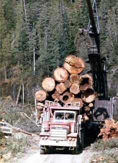Karl NelsonOld Logging Pictures  ·    Looks a little side heavy but Bill Gray took this down a 25%+ Wady main.Said he sweated a little