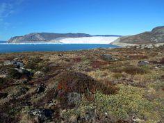 During Greenland's brief summer colorful tundra cloaks the open areas near Eqip Sermia Glacier.