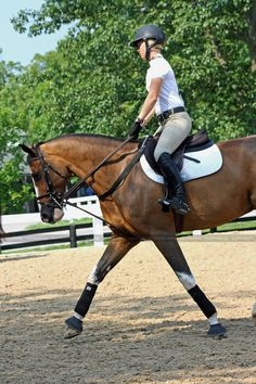"""the-a-circuit: """" ahorse-of-course: """" NAJYRC schooling arena """" What kind of saddle is this? Cute Horses, Horse Love, Beautiful Horses, Horse Photos, Horse Pictures, Hunter Horse, Equestrian Problems, Horse Girl, Equine Photography"""