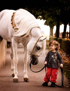 """ All horses deserve, at least once in their lives, to be loved by a little girl ""**"