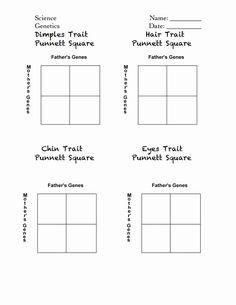 Punnett+Square+Practice+Worksheet+Answers | Genetics ...