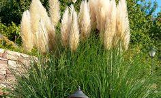 pgaborphotos: Пампасная трава