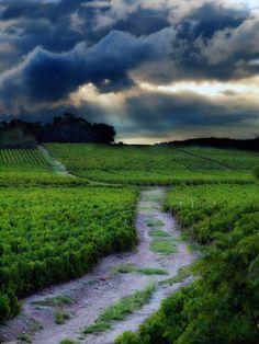 Beaujolais vineyard, France