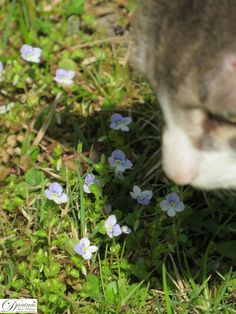 Katze Pauli genießt den Frühling im Garten Herbs, Plants, Oil Painting On Canvas, Pets, Lawn And Garden, Herb, Plant, Planets, Medicinal Plants