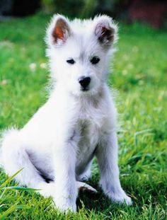 Cutie dog!