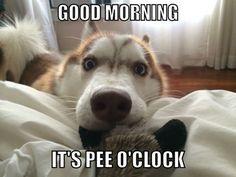So You Finally Woke Up