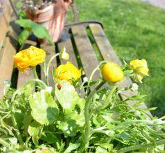 Marienkäfer auf Blumen