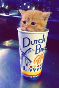Dutch Bro