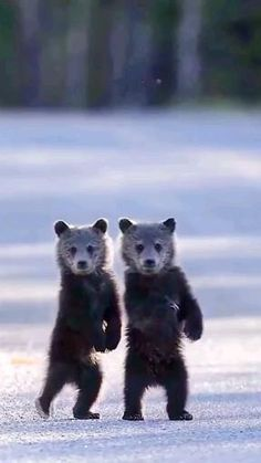 Super Cute Animals, Cute Little Animals, Cute Funny Animals, Zoo Animals, Animals For Kids, Animals And Pets, Funny Animal Videos, Funny Animal Pictures, Animal Action