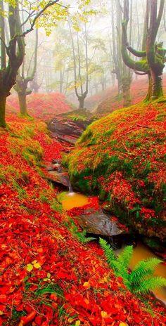 Bosque de los colores del otoño, Haya en Gorbea, País Vasco, España