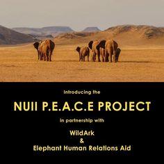 Wir bei NUII haben uns zum Ziel gesetzt, uns für die gefährdete Umwelt einzusetzen und lokale Gemeinschaften zu fördern. Wir freuen uns deshalb, gemeinsam mit @wild.ark und @ehranamibia das #NuiiPeaceProject zu starten mit dem Ziel, die vom Aussterben bedrohten Wüstenelefanten Namibias zu retten und gleichzeitig die Bevölkerung zu unterstützen.  NUII P.E.A.C.E. PROJEKT In Zusammenarbeit mit WildArk & Elephant-Human Relations Aid Im Südwesten Namibias in den Regionen Erongo und Kunene… Ark, Elephant, Peace, Projects, Movie Posters, Movies, Instagram, Setting Goals, Community