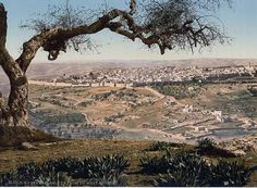 from Mount Scopus, Holy Land, ca. 1895 As the mountains surround Jerusalem, so the LORD surrounds His people. Psalm the mountains surround Jerusalem, so the LORD surrounds His people. Jerusalem, Dream Vacations, Vacation Spots, Places To Travel, Places To See, Places Around The World, Around The Worlds, Heiliges Land, Terra Santa