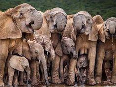 Generations by John M. Vosloo, Eastern Cape – Getaway Magazine Generationen von John M. Elephant Pictures, Elephants Photos, Save The Elephants, Animal Pictures, Elephant Images, Amor Animal, Mundo Animal, Elephant Photography, Animal Photography