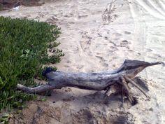 arena y troncos