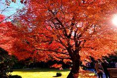嵯峨野・大河内山荘 ~京都の紅葉 Okochi Sanso(mountain villa) / Autumn leaves/Fall foliage in…
