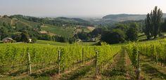 """Die Einzellage """"Grassnitzberg"""" des Weinguts SKOFF ORIGINAL"""