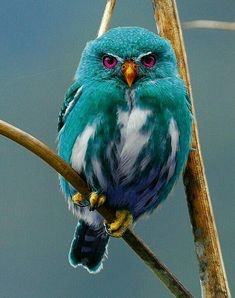 BLUE OWL. More Pins Like This At FOSTERGINGER @ Pinterest