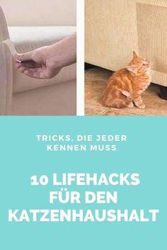 Für diese Tricks musst du kein Handwerkertalent sein und kannst sie garantiert sofort in den Alltag mit deinen Katzen einbauen!