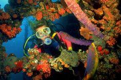 Gotta get back to scuba diving!!