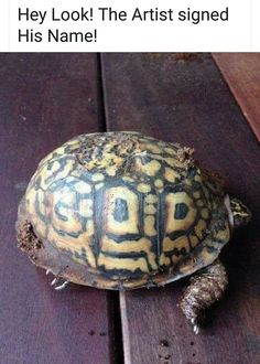 be0b9056 Church Memes, Jesus Loves You, Turtle, Jesus Saves, Inspirational Quotes,  Twitter
