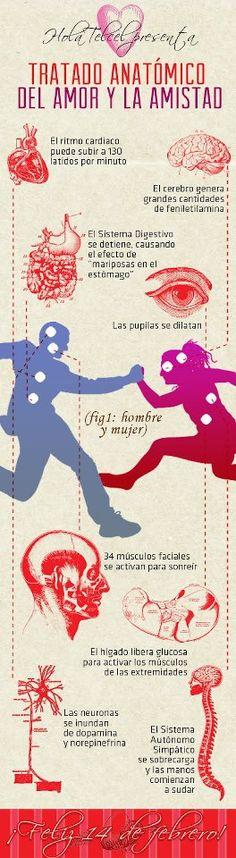 Así es la anatomía del amor y la amistad. Muchísimo más de vida saludable en www.solerplanet.com