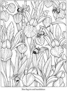 Colouring-in page – sample from 'Creative Haven NatureScapes Coloring Book' via Dover Publications ~s~ Make your world more colorful with free printable coloring pages from italks. Our free coloring pages for adults and kids. Adult Coloring Pages, Printable Coloring Pages, Coloring Sheets, Coloring Books, Colouring In, Colouring Pages For Adults, Kids Coloring, Colorful Pictures, Colorful Flowers
