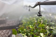 We are known as the best Irrigation Repairs and Retic Repair services provider in Perth. Check out precious testimonials provided by our valuable clients.