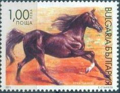 Arabian Horse (Equus ferus caballus)