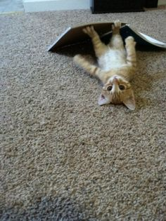 little baby atticus peepin at you #cats # kittens