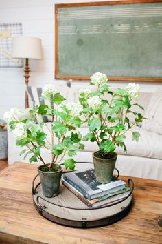 A close-up of potted white floral stems on the coffee table in the King home, as seen on Fixer Upper.