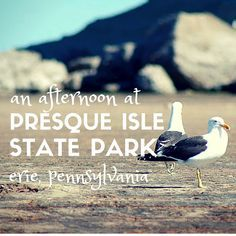 Collect some sea glass and ride your bike along the trails at Presque Isle State Park in Erie PA #daytripsanddaydreams