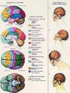 Head injury chart