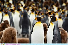 Penguins are awesome !