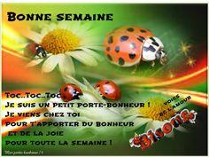 Image Fb, 1 News, Good Morning, Encouragement, Health Fitness, Positivity, Messages, Motivation, Lyon