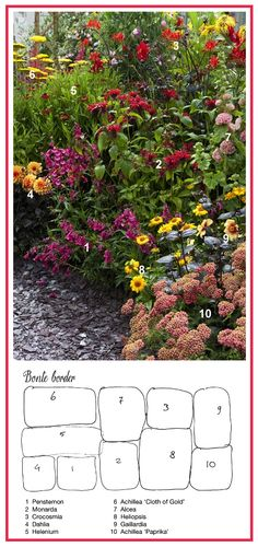 Spotted Border in Warm Colors ................... 1. Beard Tongue 'Rich Ruby' (Penstemon)  2. Bee Balm 'Gardenview Scarlet'  3. Crocosmia 'Lucifer'  4. Semi-Cactus Dahlia 'Ludwig Helfert'  5. Sneezeweed 'Moerheim Beauty' (Helenium)  6. Fern-Leaf Yarrow 'Cloth of Gold' (Achillea filipendulina)  7. Hollyhock (Alcea Rosea)  8.  Smooth Oxeye 'Summer Sun' (Heliopsis helianthoides)  9. Blanket Flower 'Kobold' (aka 'Goblin') (Gaillardia x grandiflora)  10. Common Yarrow 'Paprika' (Achillea…