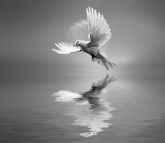Photo Universal Principle by Josep Sumalla on 500px